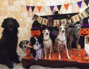 愛犬写真 ライアン、虎丸、ミント、杏寿、ニコル、アルバ