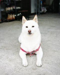 愛犬写真 はな