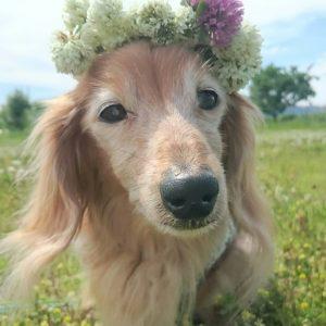 愛犬写真 クレア