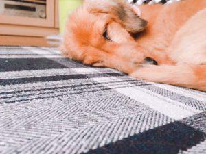 愛犬写真 モカ