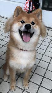 愛犬写真 だいず