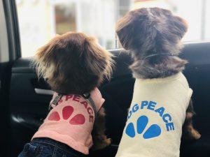 愛犬写真 ルネ&ケイト