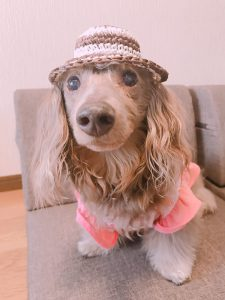 愛犬写真 ティアラ
