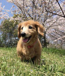 愛犬写真 くぅ