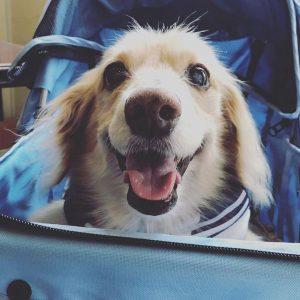 愛犬写真 レオン