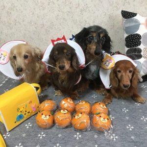 愛犬写真 キャンディ・クレア・ジジ・ちゃめ