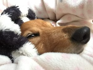愛犬写真 めい
