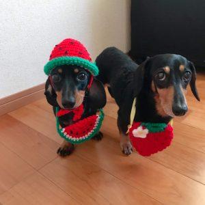 愛犬写真 トマト&ラムネ
