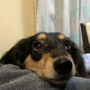 愛犬写真 まろ