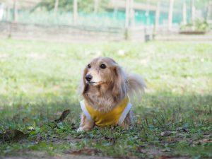 愛犬写真 チャンプ