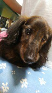 愛犬写真 ティキ