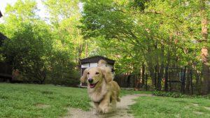 愛犬写真 リク