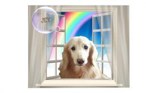 愛犬写真 ジェイ