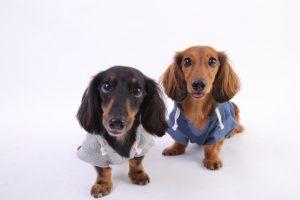 愛犬写真 チップ&デール