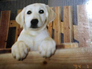 愛犬写真 サラ