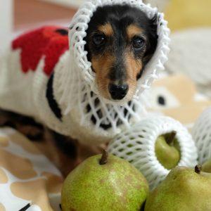 愛犬写真 リリー