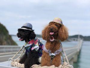 愛犬写真 ルナ&オレオ