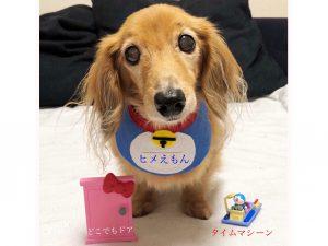 愛犬写真 姫