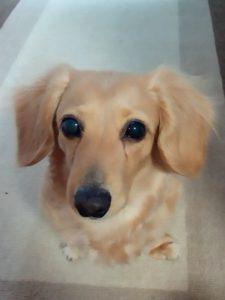 愛犬写真 チェルシー