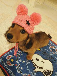 愛犬写真 ハニー