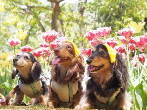 愛犬写真 MORE&COCO&TOWA