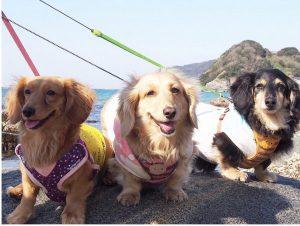 愛犬写真 アポロ☆ララ☆ハッピー
