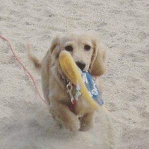 愛犬写真 vivian