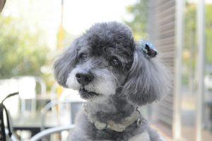 愛犬写真 ファミ