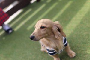 愛犬写真 JASPER
