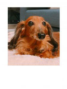 愛犬写真 チリ