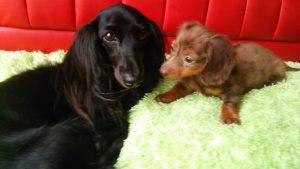 愛犬写真 ネロ、北斗、さくら、マロン、パール、ノエル、アネラ、レア
