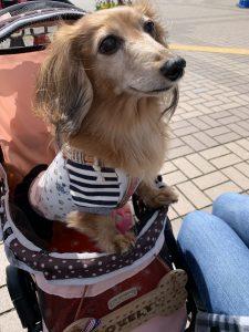 愛犬写真 ラブリー