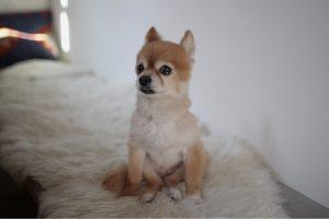 愛犬写真 マロン