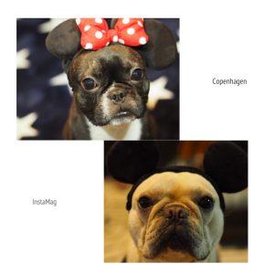 愛犬写真 とうふ、サスケ