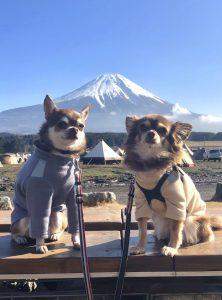 愛犬写真 ビビとコタロウ