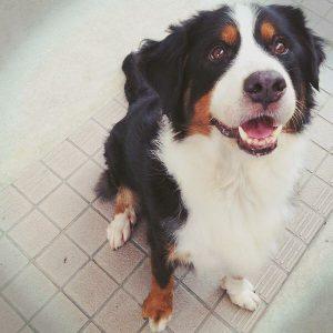 愛犬写真 ハロ
