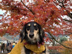 愛犬写真 エマ
