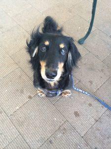 愛犬写真 サム