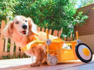 愛犬写真 バニラ(ばにさん)