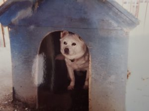 愛犬写真 ジュン