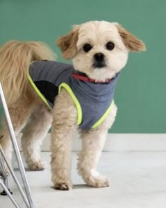 愛犬写真 コロン
